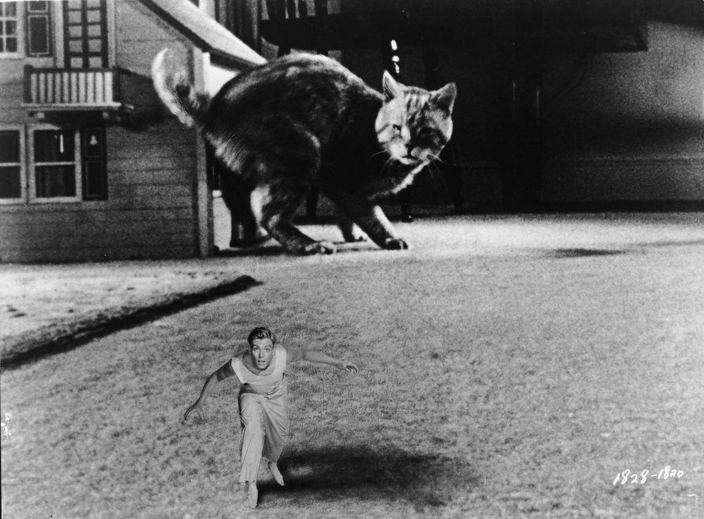 American actor Grant Williams (1930 - 1985) freezes in terror as he is noticed by feline actor Orangey in a scene from the film 'The Incredible Shrinking Man,' directed by Jack Arnold, 1957. The effect was created by the superimposition of one image, that ot Williams, over another, the of the background that contains the cat and a dollhouse. (Photo by Universal Pictures/Courtesy of Getty Images)